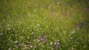Свежие луга и красочные зацветая цветки Камера двигает от дна до луга с яркими цветами видеоматериал