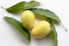 свежие мангоы зрелые Стоковые Фотографии RF