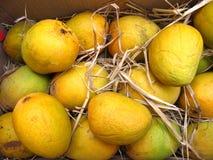 свежие мангоы Стоковая Фотография RF