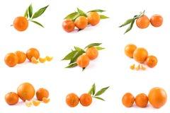 Свежие мандарины изолированные на белой предпосылке Апельсины аранжированы в строках Установлено на белой предпосылке стоковое фото