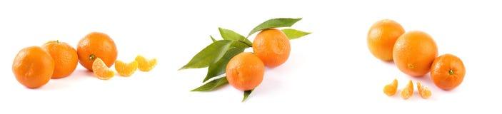 Свежие мандарины изолированные на белой предпосылке Апельсины аранжированы в строках Установлено на белой предпосылке стоковая фотография rf
