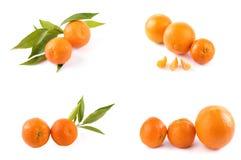 Свежие мандарины изолированные на белой предпосылке Апельсины аранжированы в строках Установлено на белой предпосылке стоковая фотография