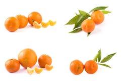 Свежие мандарины изолированные на белой предпосылке Апельсины аранжированы в строках Установлено на белой предпосылке стоковые фотографии rf