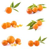 Свежие мандарины изолированные на белой предпосылке Апельсины аранжированы в строках Установлено на белой предпосылке стоковые изображения