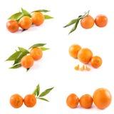 Свежие мандарины изолированные на белой предпосылке Апельсины аранжированы в строках Установлено на белой предпосылке стоковые фото