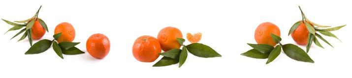 Свежие мандарины изолированные на белой предпосылке Апельсины аранжированы в строках Установлено на белой предпосылке стоковые изображения rf