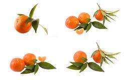 Свежие мандарины изолированные на белой предпосылке Апельсины аранжированы в строках Установлено на белой предпосылке стоковое фото rf