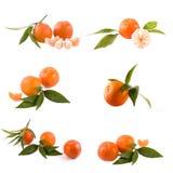 Свежие мандарины изолированные на белой предпосылке Апельсины аранжированы в строках Установлено на белой предпосылке стоковое изображение rf