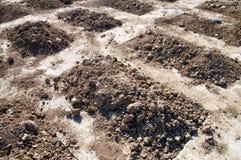 Свежие могилы Стоковые Фото