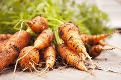 Свежие молодые моркови Стоковая Фотография