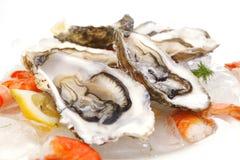 Свежие морепродукты на льде Стоковые Фото