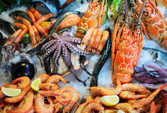 Свежие морепродукты Стоковое Изображение