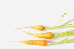 Свежие моркови младенца Стоковое фото RF