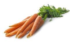 Свежие моркови Стоковая Фотография RF