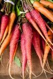 Свежие моркови Стоковые Изображения