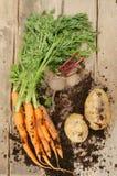 свежие овощи корня деревянные Стоковые Изображения