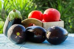 Свежие овощи, томаты и aubergines, баклажан Стоковое Изображение RF