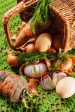 свежие овощи трав Стоковая Фотография RF