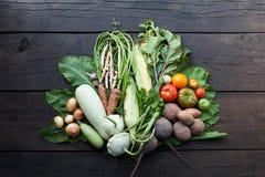 Свежие овощи фермы, сырцовое органическое земледелие стоковые изображения