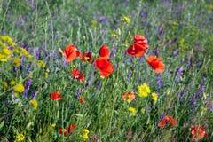 Свежие одичалые цветки поля Стоковая Фотография RF