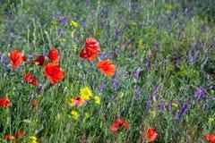 Свежие одичалые цветки поля Стоковые Изображения RF