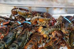 свежие омары стоковая фотография