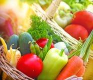 Свежие органические овощи Стоковые Фотографии RF