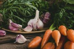 Свежие органические осенние овощи, чеснок, arugula и моркови Стоковое Изображение RF