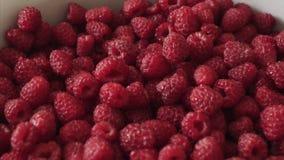 Свежие органические ягоды поленики r сток-видео