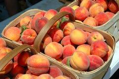 Свежие персики Стоковые Фотографии RF