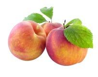 свежие персики Стоковые Фото