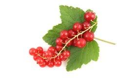 Свежие плодоовощи красной смородины изолированные на белой предпосылке Стоковая Фотография RF