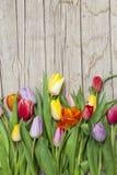 Свежие покрашенные тюльпаны перед деревянной предпосылкой Стоковая Фотография RF
