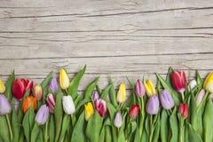 Свежие покрашенные тюльпаны перед деревянной предпосылкой Стоковое Изображение RF
