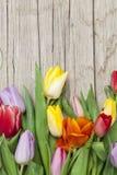 Свежие покрашенные тюльпаны перед деревянной предпосылкой Стоковое фото RF