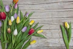 Свежие покрашенные тюльпаны перед деревянной предпосылкой Стоковые Изображения RF