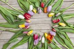 Свежие покрашенные тюльпаны перед деревянной предпосылкой Стоковые Изображения