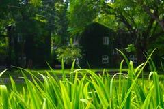 Свежие поля зеленой травы на естественной предпосылке стоковое изображение rf