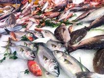 свежие продукты моря Стоковая Фотография RF