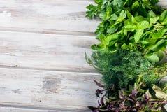 Свежие пряные травы, укроп, базилик, петрушка, мята Стоковые Изображения RF