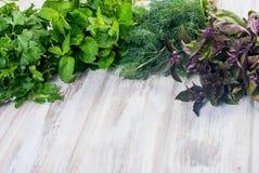 Свежие пряные травы, укроп, базилик, петрушка, мята Стоковое Изображение