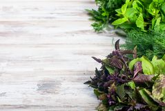 Свежие пряные травы, укроп, базилик, петрушка, мята Стоковая Фотография RF