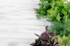 Свежие пряные травы, укроп, базилик, петрушка, мята Стоковые Фото