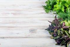 Свежие пряные травы, укроп, базилик, петрушка, мята Стоковое фото RF