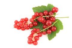 Свежие плодоовощи красной смородины изолированные на белой предпосылке Стоковые Изображения