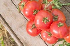 Свежие розовые томаты Стоковое Изображение
