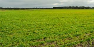 Свежие ростки на сельскохозяйственне угодье Стоковые Фотографии RF