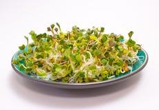 Свежие ростки редиски на плите Стоковая Фотография RF