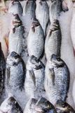 Свежие русские рыбы на льде на рынке продукта питания 12 Стоковая Фотография
