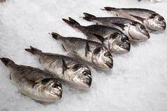 Свежие рыбы в больших ломтях льда Стоковое Изображение